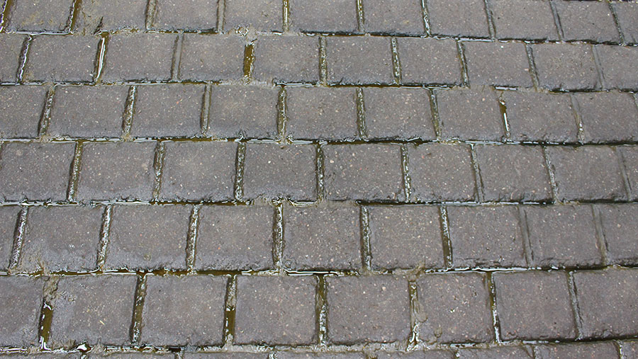 Cobbled floor in dairy shed