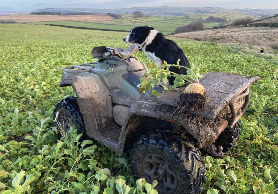 Dog on quad bike in field of root crops