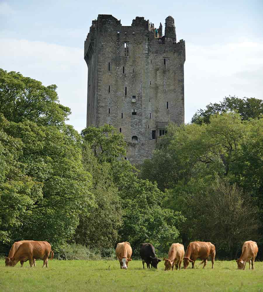 Blarney and cows
