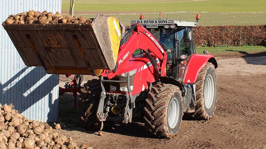 Tractor lifting turnips in farmyard