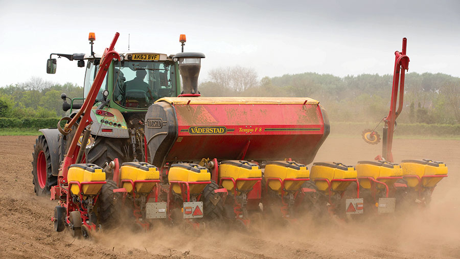 Maize being drilled