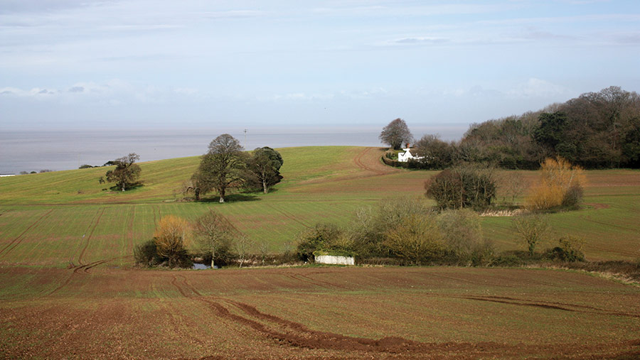 View of fields, trees and forest