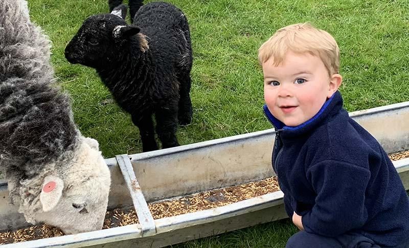 Two-year-old George checks the baby lambs from his two Herdwick ewes