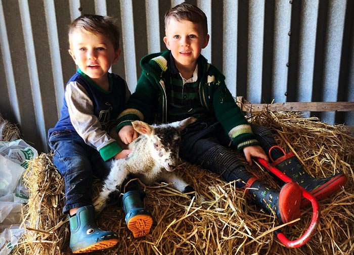 Jasper and Chester with a lamb sitting on bales
