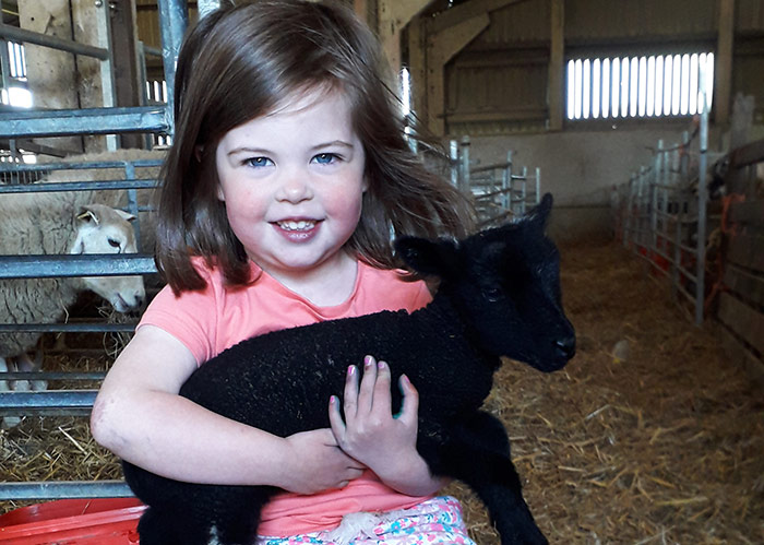 Three-year-old Olivia holding one of her Jacobs born on the family farm in Derbyshire
