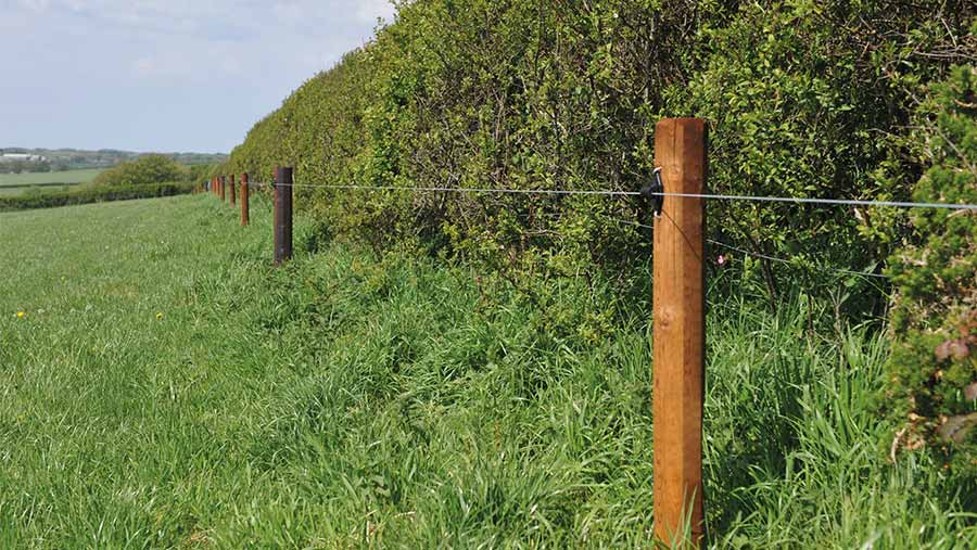 Electric fencing is good if the land is to be heavily grazed © Debbie James