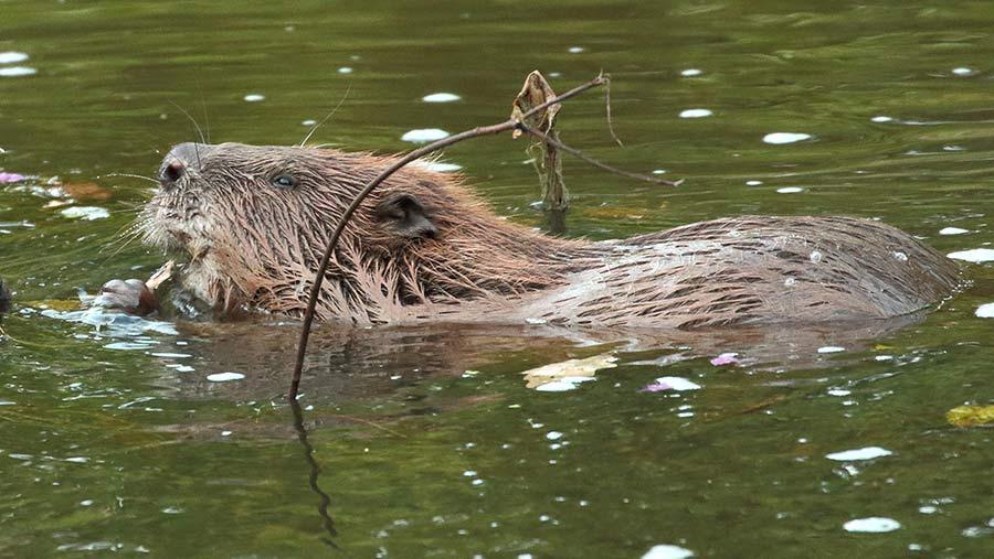 © Mike Symes/Devon Wildlife Trust