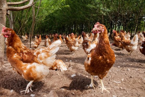 Farmers call for extension to organic derogation. Photo: Herbert Wiggerman