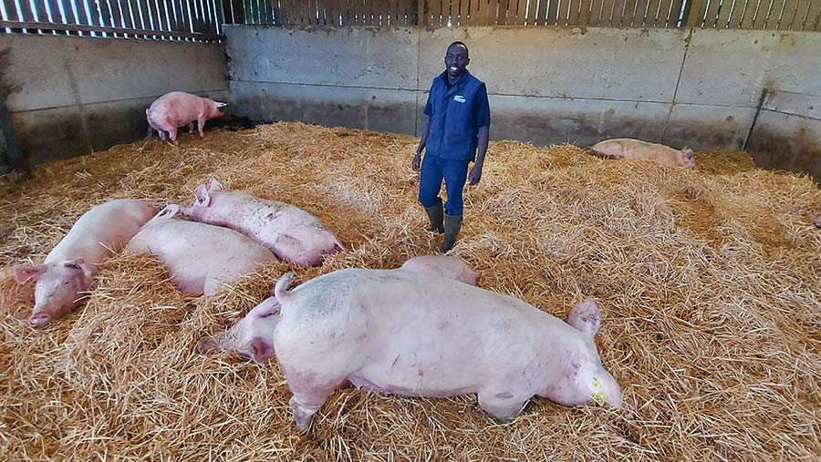 Flavian Obiero is pig unit manager at Plumpton College in East Sussex