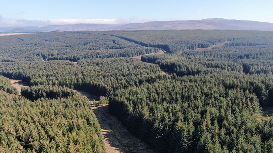 Badvoon Forest is available for offers of more than £5.75m © Clegg & Co