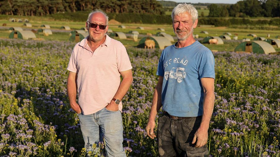 Suffolk pig producers see multiple benefits from pollinators – Farmers Weekly