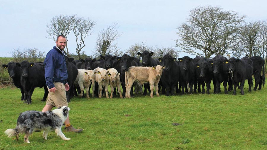 David Oates with his cattle