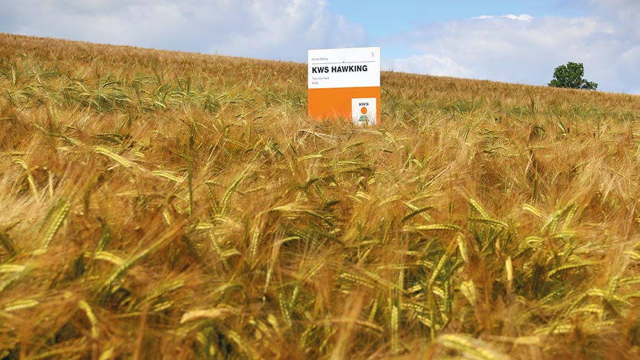 Winter barley variety Hawking