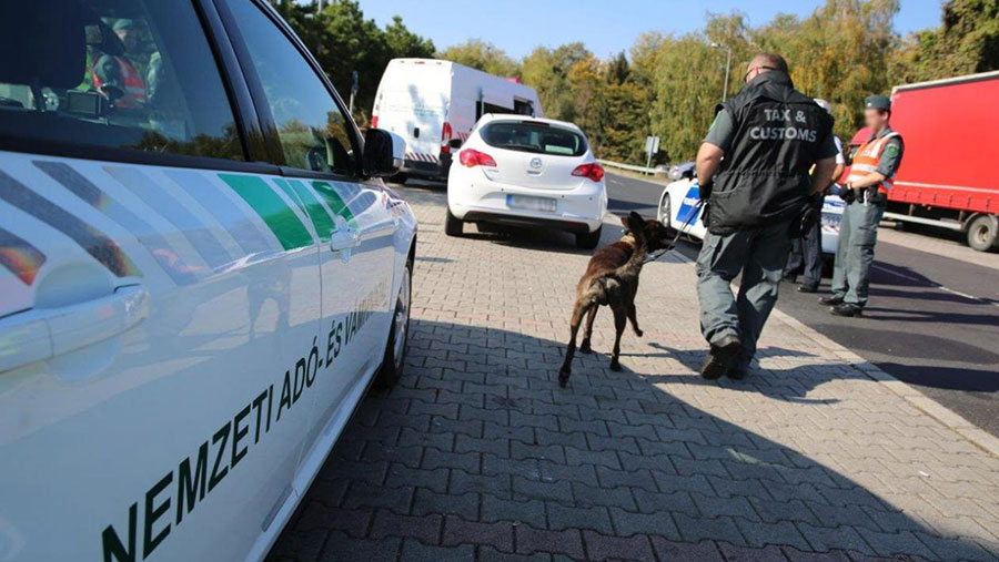 Dogs and Interpol staff doing inspection