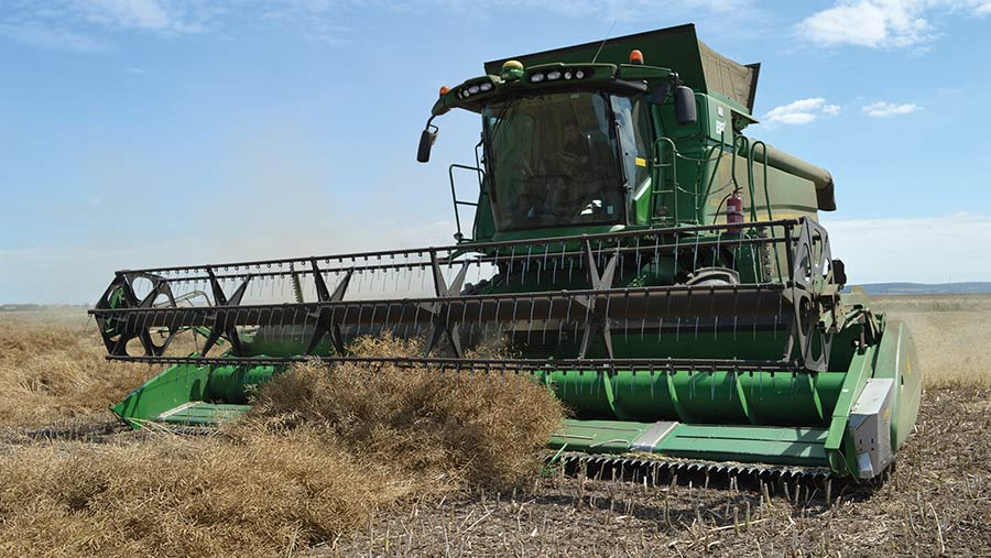 The swathed oilseed rape crop is picked up by the combine at Burden Bros Farms