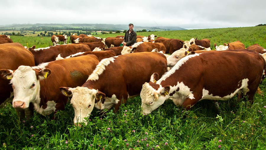 Dale Webb with cows