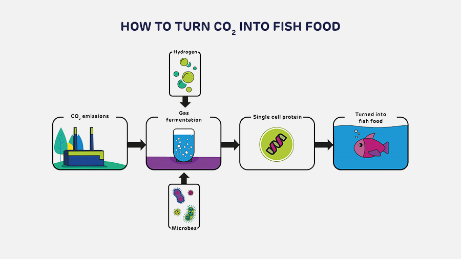 Tech that turns CO2 into animal feed gets government funding
