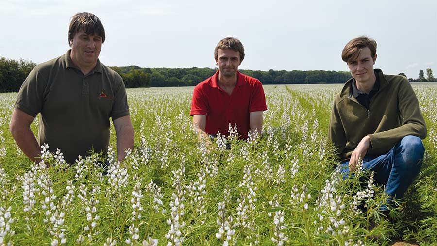 Why lupins could finally make the breakthrough as a break crop