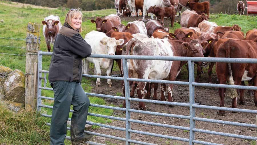 Pamela Nicol with shorthorn-cross cows