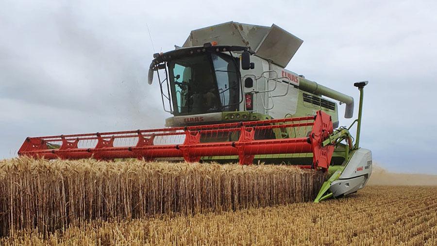 Harvest at New Hook Farm