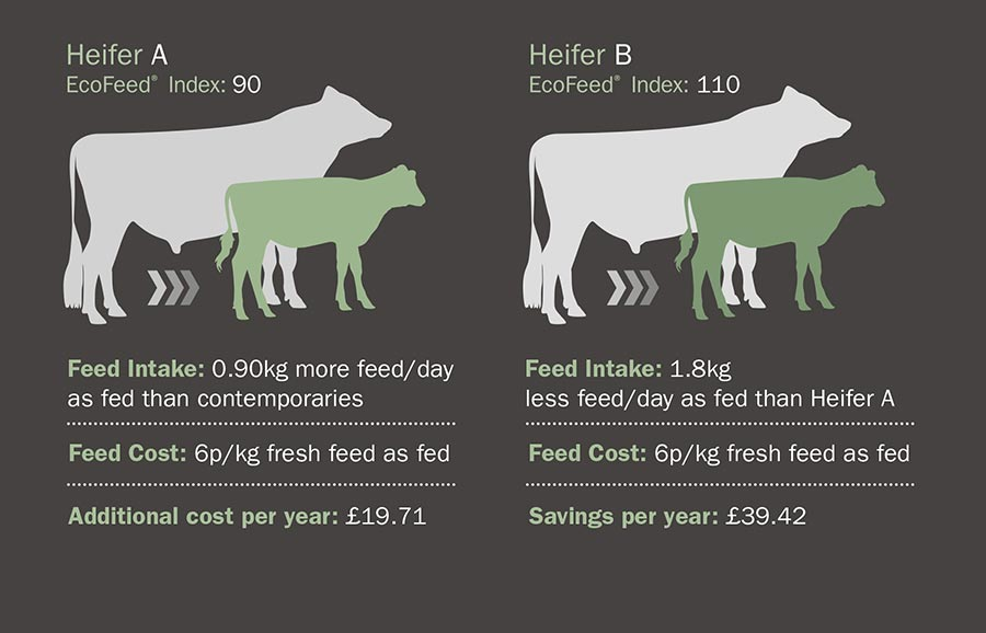 Graphic comparing EcoFeed index of Heifer cows' A and B
