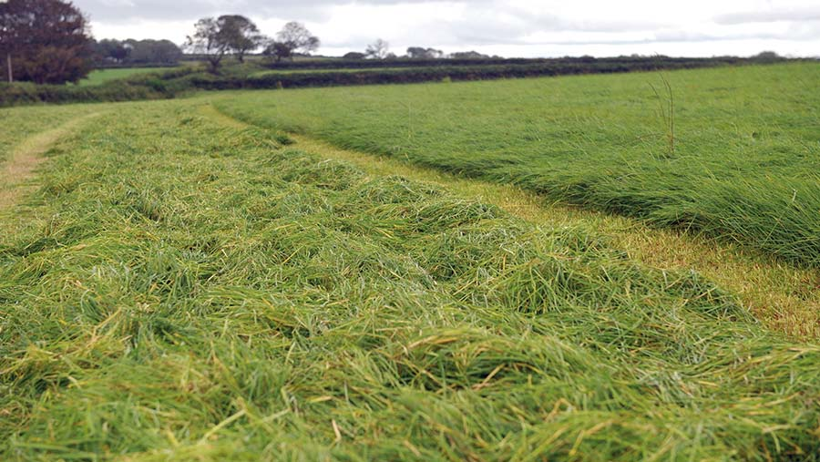Keith Williams' silage field
