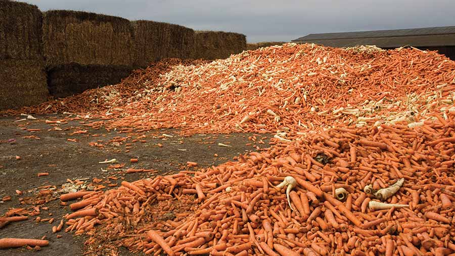 Pile of waste carrots and parsnips