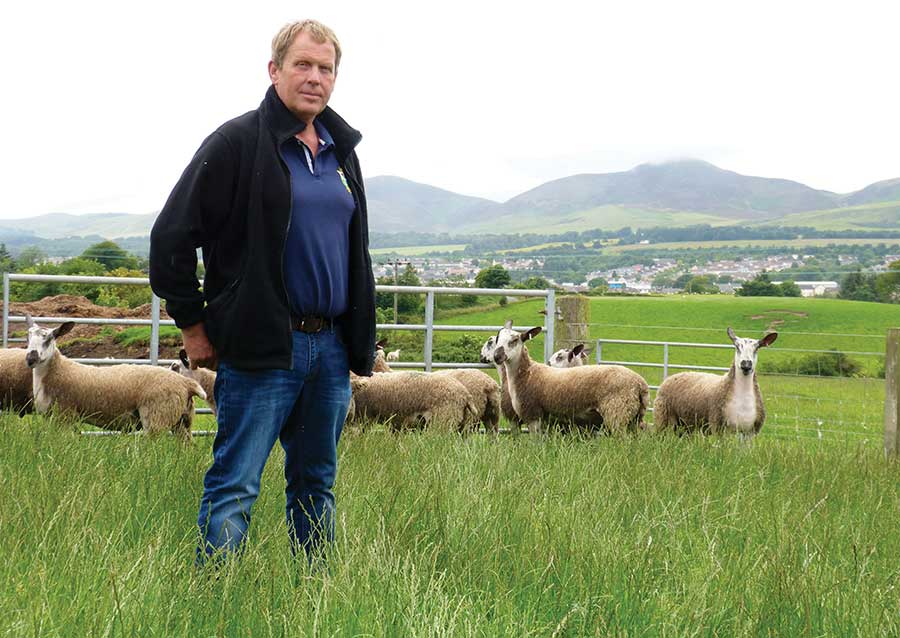 Derek Hall standing in a field with sheep