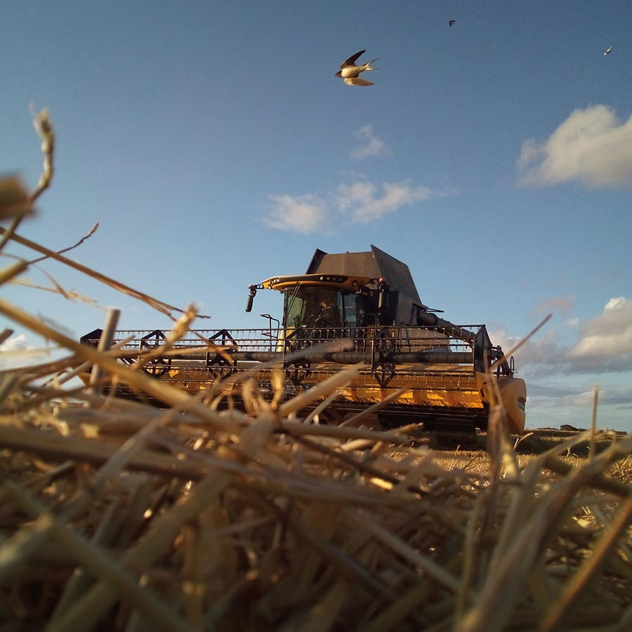 combine harvester with swallow
