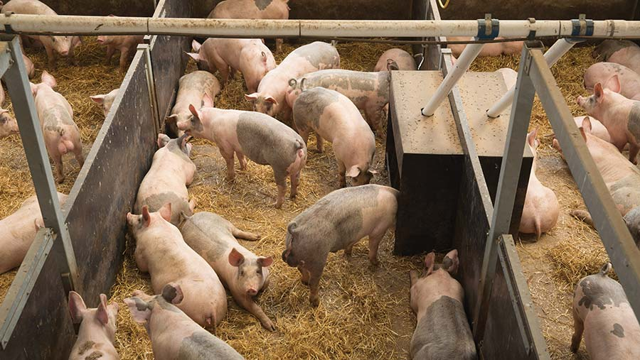 Advice On Setting Up A New Pig Unit Farmers Weekly