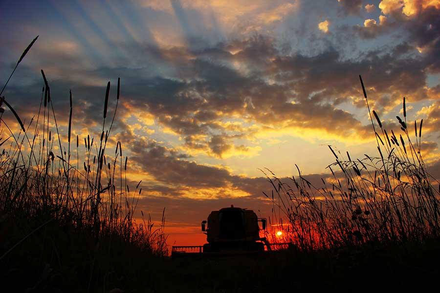 Harvest at sunset