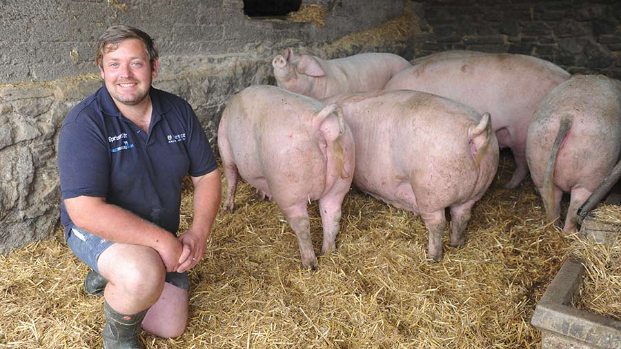 Stuart Williams with his Welsh pigs