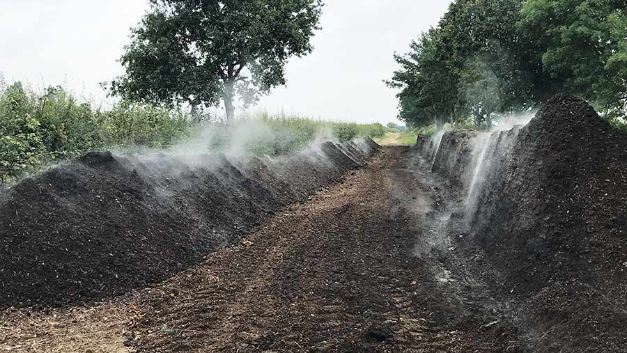 Windrows of steaming compost