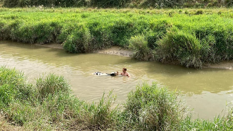 Farmer Ryan Gue rescues heifer from river