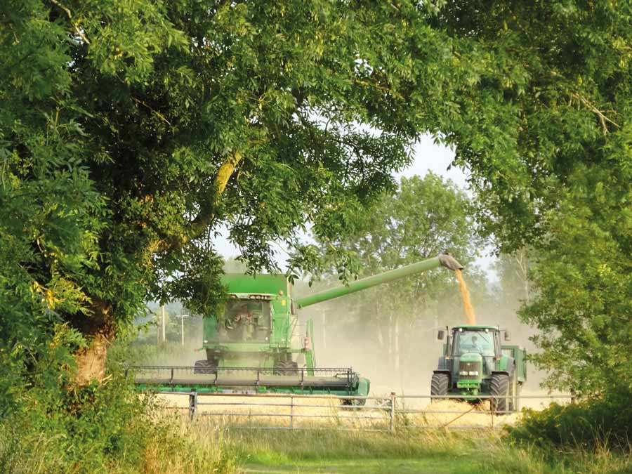 Combine in field under trees