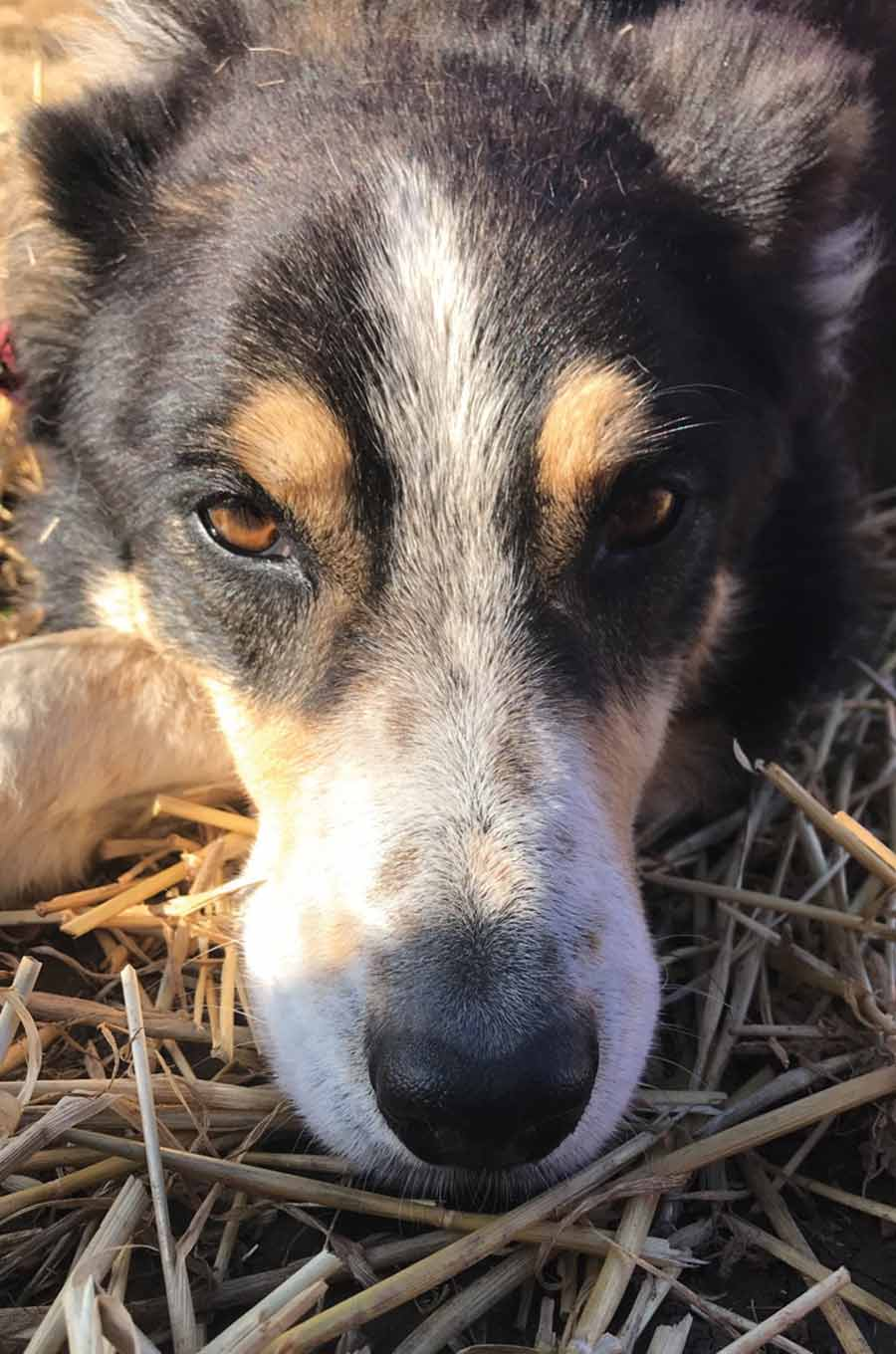 Close up of dog's face in field