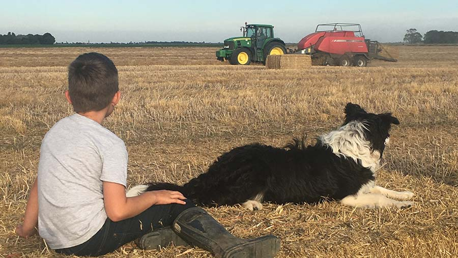 Boy and dog in field with tractor