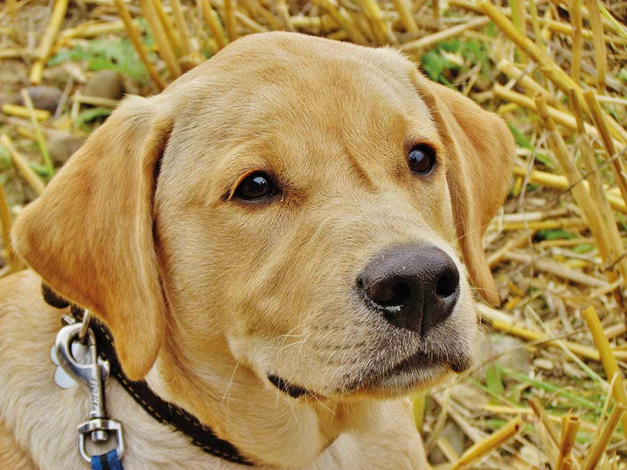 Close up of dog in field
