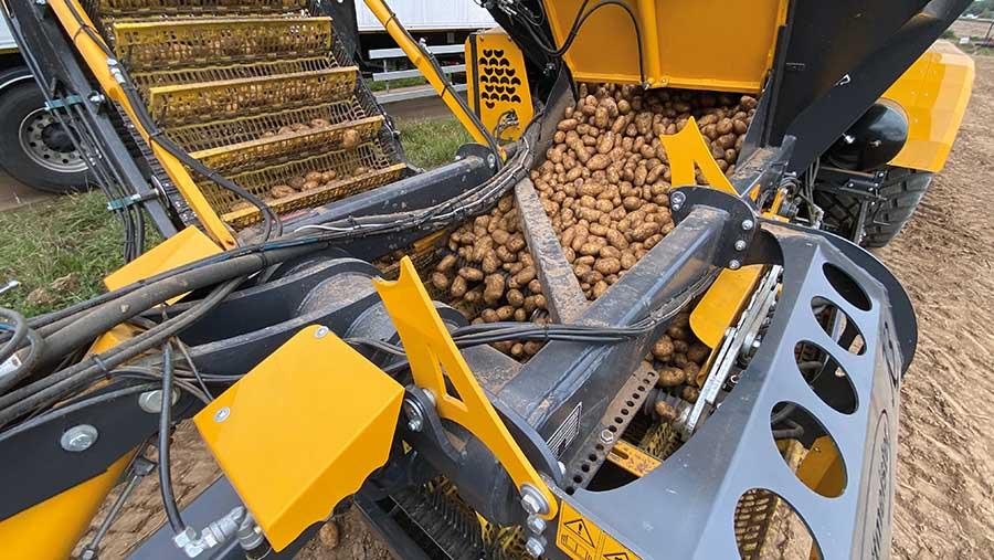 Potato chase cleaning potatoes