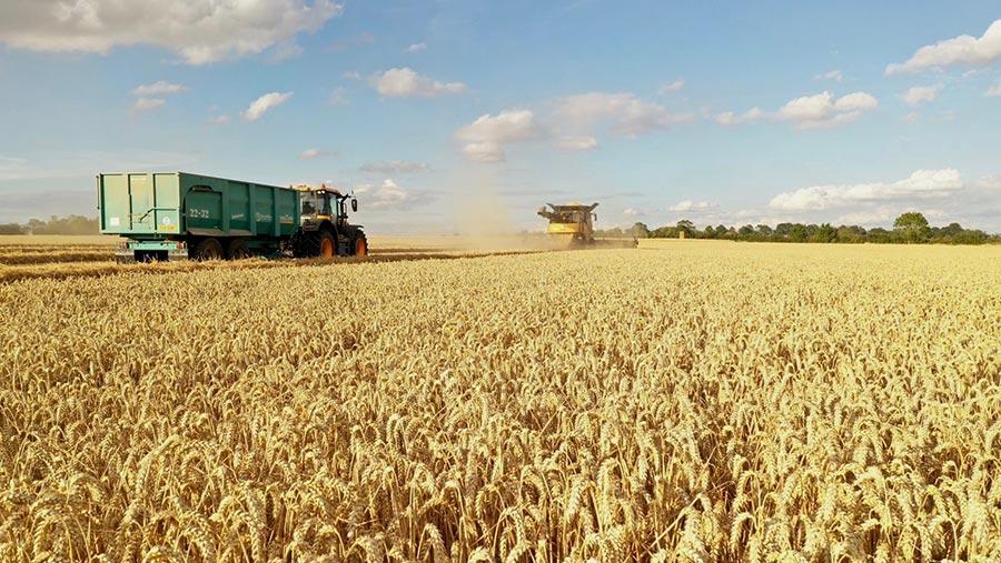 RGT Saki winter wheat