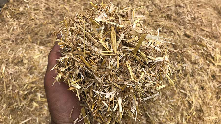 Chopped straw held in hand