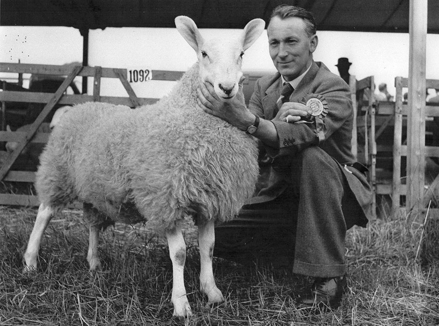 John Wrench at RWS with sheep in 1962