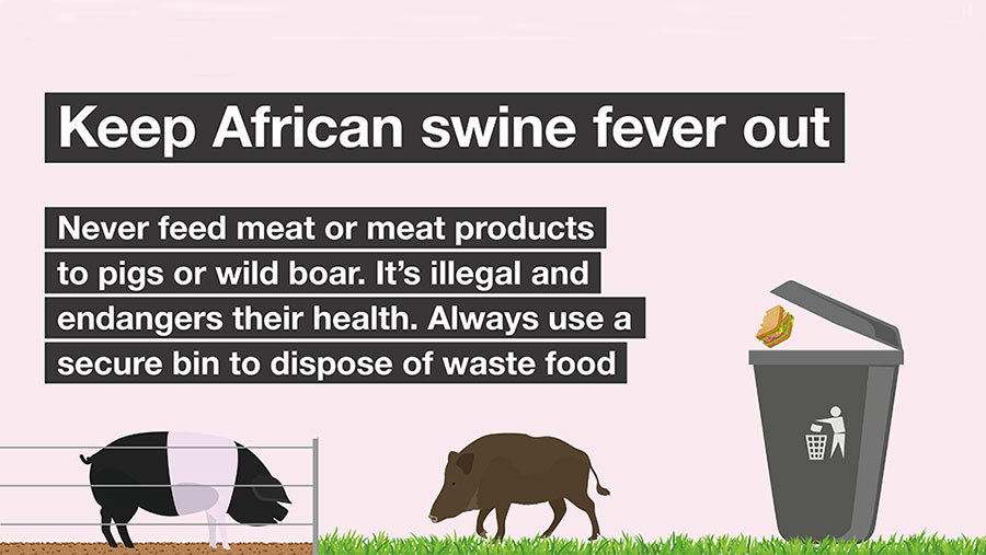 african swine fever warning graphic