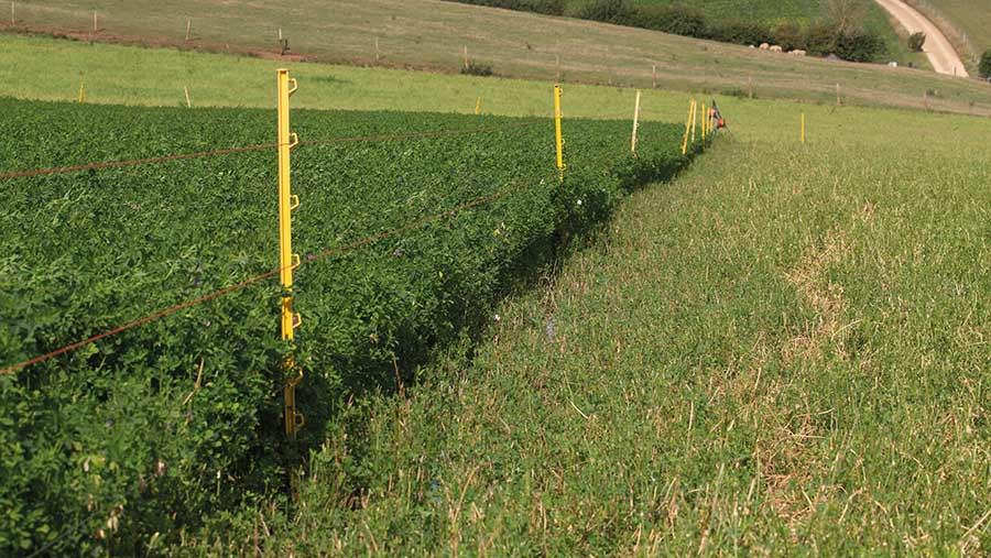 Before and after of lucerne crop
