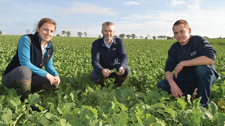Three people squatting in a field of young OSR