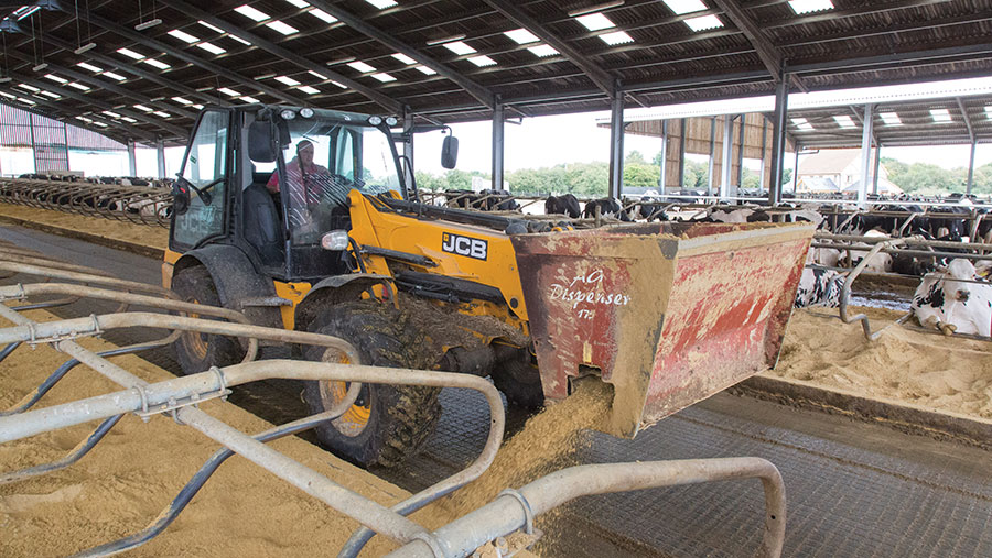 Putting sand into dairy cow cubicles