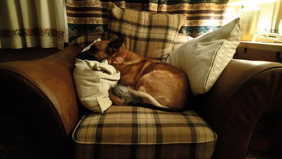 dog asleep in chair