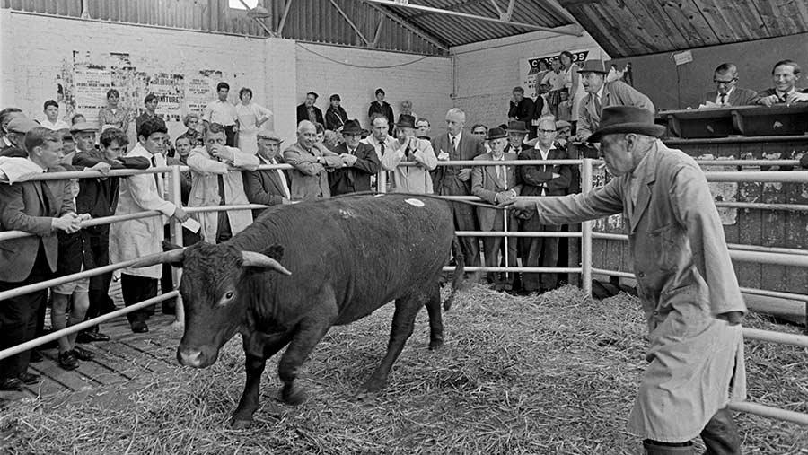 Chichester Cattle Market in 1960 © Shutterstock/John Curtis
