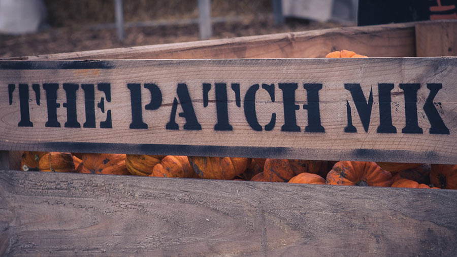 The Patch MK crate of pumpkins