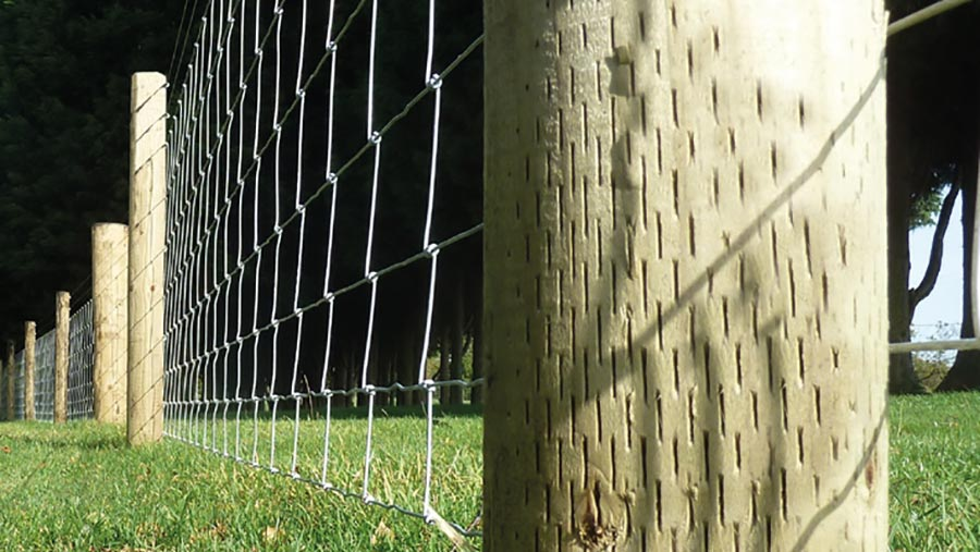 Timber fence posts and fence